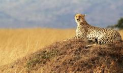 8-Day Kenya Family Holiday Safari