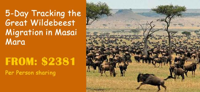 5-Day Tracking the Great Wildebeest Migration in Masai Mara